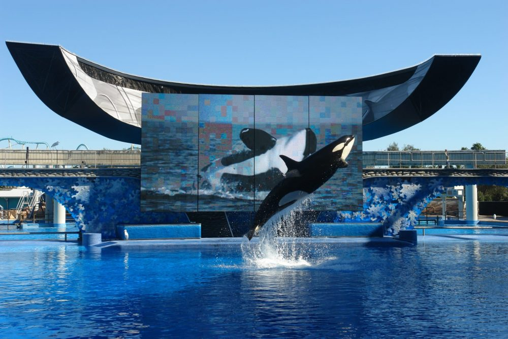 SeaWorld's PR and spin shame